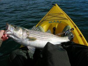 Spring Bass Tactics